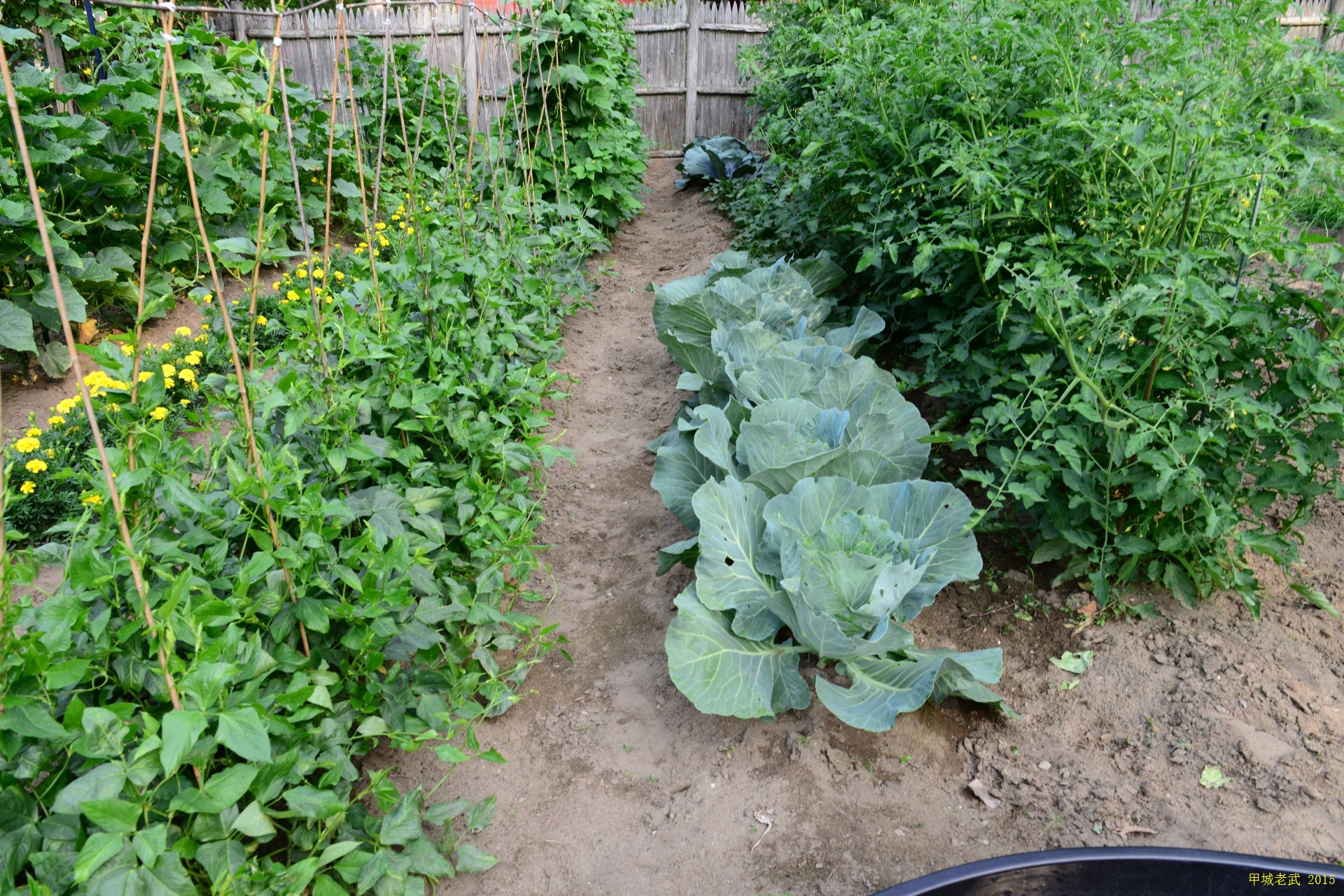 Vegitable Garden